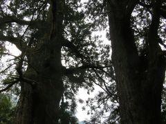 2018春、熊野の世界遺産巡り(2/5):4月30(2):熊野古道、大門坂、杉木立、夫婦杉、樟の古木、十一文関跡