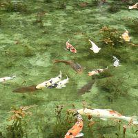 輪島市。舳倉島。モネの池を巡る。その3モネの池と大滝鍾乳洞。