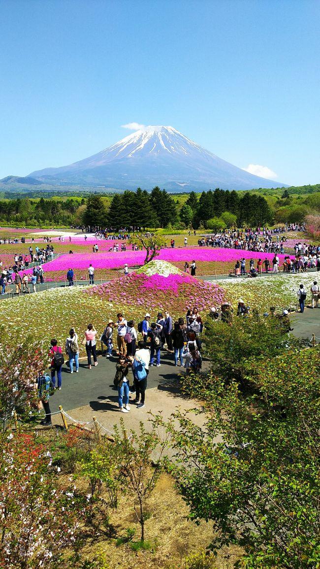 富士山の麓の広大な敷地に、80万株の芝桜が色鮮やかに咲き誇ります。<br />富士山と真っ青な空、ピンクの絨毯の芝桜のコントラストがとても綺麗(*^_^*)