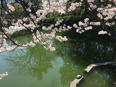 2018春の名古屋★ 鶴舞公園でお花見
