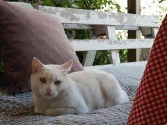 緑あふれる古都ブルサの旅 Day 3~ワン猫との出会い&シリア人街探検~