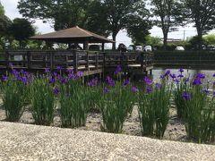お昼を山茶屋さんで~早水公園であやめ園を散策して見ます