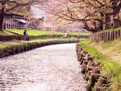 春の川越 ~桜と花筏と小江戸の風景~