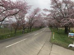 スイーツアウトレット店と満開の桜 北海道2泊3日
