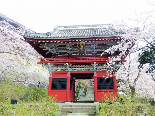 書き忘れていた坂東札所旅行記シリーズ その2<br /><br />秩父札所巡礼をした友人たちと今度は坂東札所巡礼をすることにしました。<br />総開帳の間に回ろうと思った秩父でしたが<br />今度はリミットはなし。<br />ゆっくり回ろうと思います。<br /><br />この日は、桜の見ごろ。<br />桜川市では桜の時期に合わせて、さくら臨時バス【山桜号】という臨時バスが出ます。<br />1日500円で乗り放題、ガイドさんも添乗するのでお得なバスです。<br />利用される方は市のHPでご確認を。<br />http://www.kankou-sakuragawa.jp/page/dir000282.html<br /><br />まずは臨時バスで岩瀬駅から櫻川磯部稲村神社へ向かい<br />その後岩瀬駅からレンタサイクルで札所24番楽法寺(雨引観音)に<br />向かいました。<br />