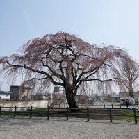 函館に桜を見に行く2-残念な3分咲きの法亀寺,松前藩戸切地陣屋跡の桜