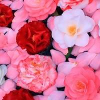 京都・お花見&カフェめぐりの旅2日目