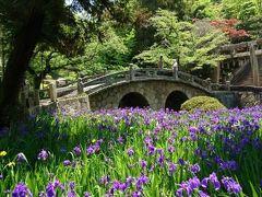 岡山☆カキツバタとポピーを見に行きました