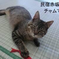 冬の民宿赤坂田逗留記・その1 赤坂田に新入りネコが入ったよ。