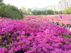 GWのソウルから街歩き2018(3)「軍浦つつじ祭り」