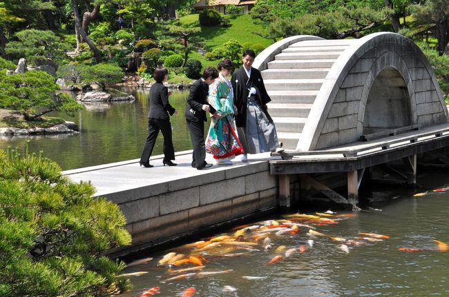 """「名勝・縮景園」は、広島市の代表的な観光スポットですが、これまで行ったことがなかった。行く機会がなかったと言った方がいいかも・・・。<br /><br />  今回、初めて足を運んでみることにしました。GWの人混みを避けて平日に行くことにしたのだが、この日は天気もよく、観光客も少なくゆっくりと散策することができた。<br /><br /> これまでもあちこちの庭園、名勝を訪れているのだがやはり地元の名勝を訪ねてみなければなるまい。ここ縮景園は過日訪れた岡山後楽園ほどの規模はないが、こじんまりとしたよくまとまった庭園という印象である。<br /><br /> 庭園・名園といえばほとんどがその地方の大名・藩主が築庭したものだが、ここ広島の縮景園もかつての広島藩主、浅野長晟(ながあきら)が、元和(げんな)6年(1620)から別邸の庭園として築庭したもので、作庭者は茶人として知られる家老の上田宗箇である。<br /><br /> この庭園もやはり""""回遊式庭園""""で、中央にある池を中心に大小10余の島を浮かべ、周囲に山を築き庭園をゆっくり鑑賞できるようになっている。<br /><br /> この庭園に隣接して県立美術館、少し離れたところに広島城があり、市民や県民にとって良き憩いの場になっている。<br /><br /> 新緑の候、広島の名勝・縮景園を訪ねたつたない記録を紹介させて頂きます。<br />"""