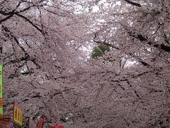 ☆2018年桜旅 第3弾! 弘前 角館☆ 弘前編 No1