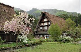 2018年4月 3日目 その2 岐阜 白川郷 桜咲く合掌造りの集落を1時間半散策