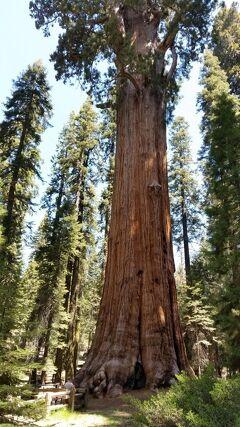 アメリカ大西部感動の旅4つの国立公園と7つの絶景巡り9日間 3日目キングスキャニオン国立公園・セコイア国立公園