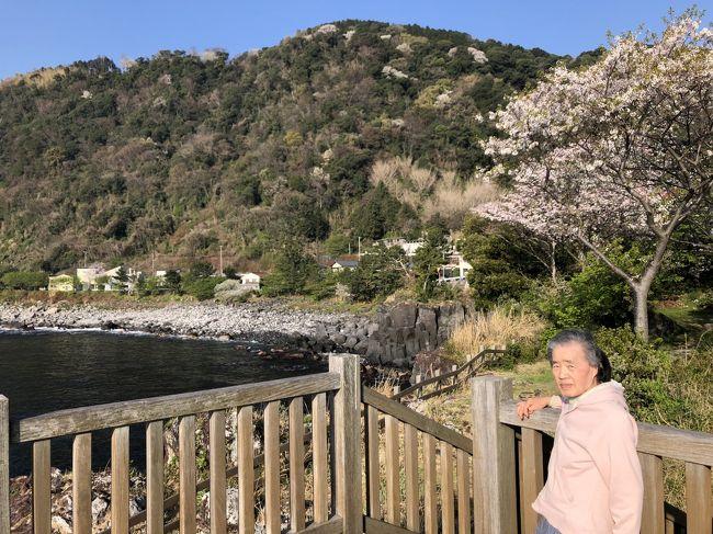 富戸駅から徒歩10分の所にある貸別荘シーフロント Moon and Sandさんに宿泊しました。<br /><br />母が海の絵を描きたいというので、海岸から徒歩0分という口コミを信じて予約しましたが、まさに海の目の前でした。<br />写真の左側に立っているのが泊まった貸別荘です。<br /><br />1階のリビングからずっと海を見ながら2枚ほど仕上げていました。日差しを気にすることがないので息子としても安心でした。<br /><br />少し散歩がしたいということで、「産着石」がある「宇根の展望台」まで歩きました。緩やかな坂でしたので90になる母にも負担が少なかったと思います。桜が満開でとてもきれいでした。<br />