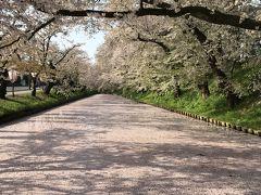 201805GW-05_GWの弘前公園の桜(花筏)