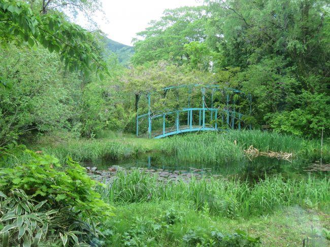 5月10日、箱根湿性花園を訪問後、午後0時45分頃にすぐ近くにある箱根ラリック美術館を訪問しました。アール・ヌ―ヴォー、アール・デコという二つの美術様式で活躍した、ルネ・ラリックの素晴らしい数々の作品を集めた美術館でしたが、写真撮影は禁止されていましたので内容を見せることはできません。斬新なデザインと優れた技術により作られた宝飾品は見どころがいっぱいでした。香水瓶のラベルのデザインを機に、ガラス工芸へと発展した芸術作品は素晴らしかったです。また、オパールについてオパールの魅力を存分に引き出したジュエリーと、計算されつくした輝きを放つオパルセントガラスをつくりました。<br />約一時間の鑑賞後に休憩室から見られる睡蓮の池や蝶の森を散策しました。 その後、カフェレストラン「LYS」で遅めの昼食を取りました。 最後にルネ・ラリックがオリエント急行として使用された列車内の豪華な内装を手掛けた車両を外から見ました。<br /><br />*写真は箱根ラリック美術館の周囲にある睡蓮の池