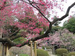 梅香る水戸偕楽園と水戸藩の藩校・弘道館を巡る
