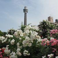 『ガーデンネックレス横浜2018』4つのローズガーデン@山下公園〜港の見える丘公園