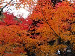 紅葉の京都4泊5日の旅 2017年11月