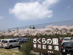 富戸に泊まって伊豆の桜を満喫(さくらの里)