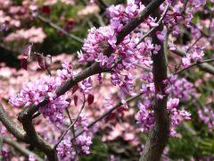 春の優雅な横浜♪ Vol.8 港の見える丘公園♪