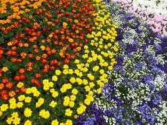 春の優雅な横浜♪ Vol.14 象の鼻パーク♪