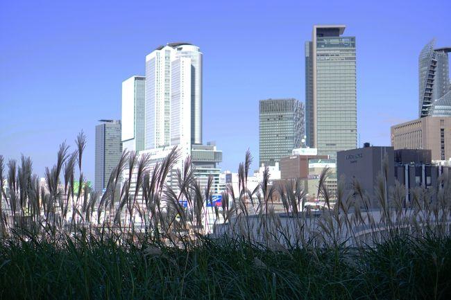 7月中旬まだまだ、暑い日がつづきます。<br /><br />名古屋も連日35度越えです。<br /><br />この暑さにおとらず、名駅周辺熱いです。<br /><br />昨年秋のささしまライブでのお話です。<br /><br />娘の英検2次試験が、愛知大学名古屋キャンパスであり。<br /><br />ささしまライブにやってきました。<br /><br />【グローバルゲート】<br />http://globalgate.nagoya/<br /><br />【ささしまライブ】<br />http://sasashima.nagoya/<br /><br />【Osteria L'amante Nagoya Global Gate オステリア ラマンテ<br /> ナゴヤ グローバルゲート】<br />https://tabelog.com/aichi/A2301/A230101/23065098/