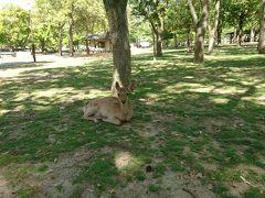 奈良公園と鹿