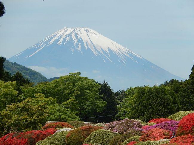 5月11日、午前11時半頃に箱根神社参拝を終えて、すぐ近くにある小田急山の上ホテルへ立ち寄りました。 目的はホテルから見られるつつじ園と富士山の絶景を見るためです。 つつじ園に入って十分に絶景を堪能したかったのですが、その後の予定があるために軽い昼食を取るだけにしました。<br /><br /><br /><br />*山の上ホテルの庭園入り口付近から見られた富士山の絶景