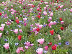 春の優雅な横浜♪ Vol.20 新港中央広場♪