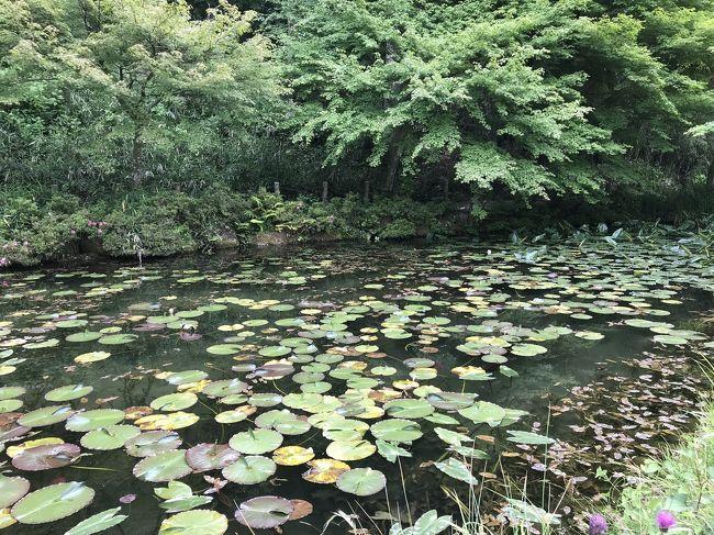 岐阜県関市板取にある名もなき池、通称モネの池に行ってみました。東海北陸道の美濃インターチェンジから20km以上山あいに登っていった先にあります。<br />もともとは神社の下のため池のようですが、ジベルニーのモネの家にある情景と雰囲気が似ているということで、記憶の新しいうちに行ってみようということになりました。