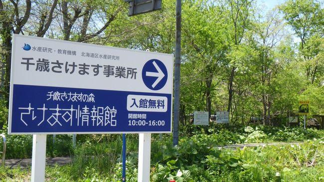 千歳駅前から支笏湖まで、貸自転車でサイクリング。2年前のサイクリングでは休館日だった「さけます情報館」に寄ってきました。