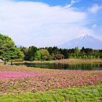 富士山の麓で春を満喫 〜天空のチューリップ畑と富士芝桜まつり〜