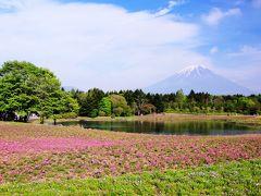 富士山の麓で春を満喫 ~天空のチューリップ畑と富士芝桜まつり~