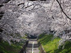 早目に見頃を迎えた足利の桜巡り+別の日に行った足利のカフェなど