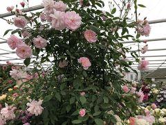 世界最大の花の祭典「RHSチェルシーフラワーショウ」に行って来ました~2018年5月