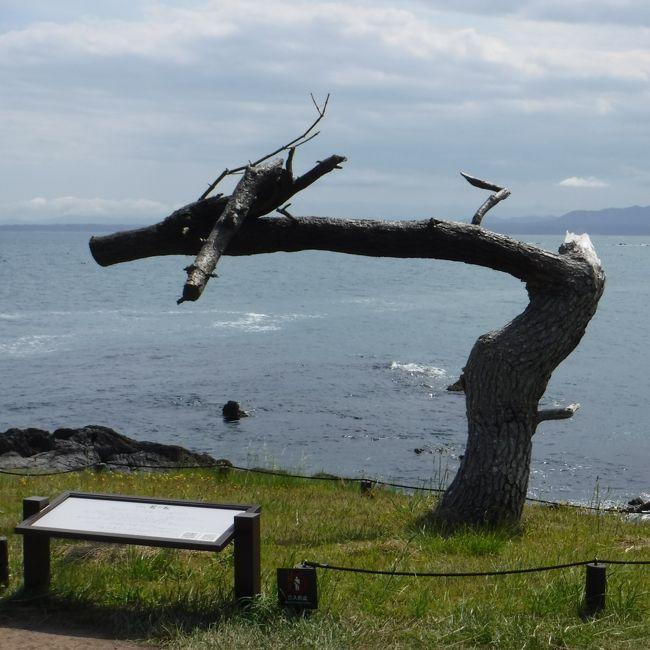 気仙沼の「海の市」で第1回気仙沼観光フェスティバルが開催されると<br />新聞で見たので、行ってみることにした。<br />ちょうど、気仙沼の徳仙丈山のツツジも見頃との事で<br />ツツジ登山にもチャレンジ。