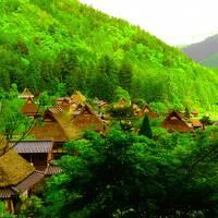 ☆癒し時々抹茶の旅 森の京都編☆