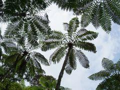 ジャングル散策とレンタカーで島巡り