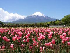 冠雪の富士山を求めて…(2日目:鐘山苑~山中湖~花の都公園~忍野八海~富士芝桜まつり)