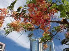今年のハワイはヒルトンガーデンインワイキキビーチ3泊ご招待
