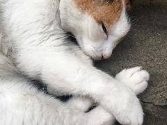 GW2018香港 猫を求めてさまよう西環パトロール部④ 最終日朝散歩と蓮香樓と最終パトロールで帰国・・ お土産も
