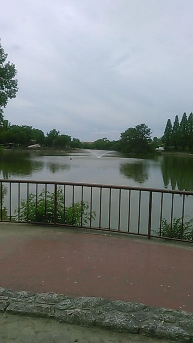 毎年恒例の城北公園菖蒲園の公開にきました。六月13日までです。