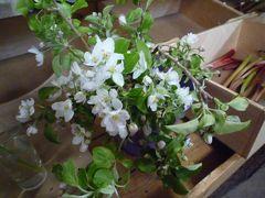 リンゴの花の咲くプリンスエドワード島へ その2(シャーロットタウン散策)