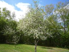 リンゴの花の咲くプリンスエドワード島へ その3(アンツアー&ミュージカル「アンとギルバート」)