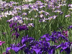 花を求めて④水元公園
