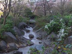 東京新美術館から乃木神社・檜町公園付近のさくら