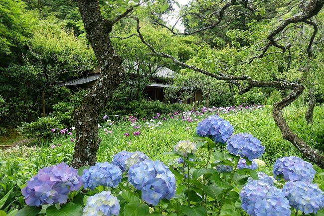 鎌倉のあじさいスポットを巡ってきました。平日の午前中ということもあって、どこも特に行列はなく、マイペースで散策することができました。あじさいの数、見せ方ともに明月院が一番印象的でした。<br />(江ノ電)→極楽寺→(歩き)→成就院→(歩き)→御霊神社→(歩き)<br />→長谷寺→(江ノ電/歩き)→明月院→「鎌倉名月のあんみつ」→(歩き)→東慶寺→(JR/江ノ電)→七里ヶ浜「珊瑚礁のカレー」