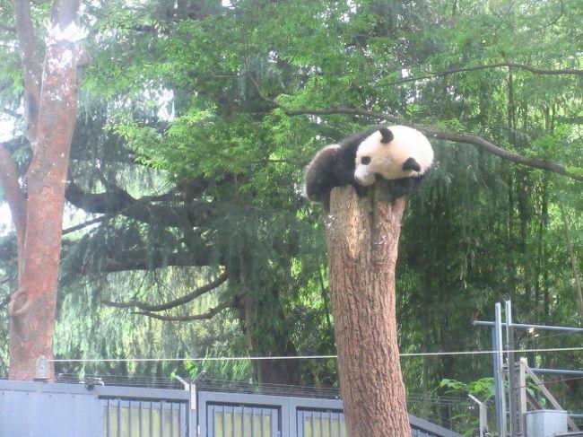 日本水彩展が東京都美術館で開催されている。<br />友人が毎年出展している、今年もその作品を見に出かけた。<br />となりの上野動物園も、2日後に満1歳の誕生日を迎えるジャイアントパンダ人気で賑わっていた。<br />並べば見られそうなので久しぶりの動物園散策にも行った。